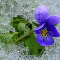 Сентябрьский снег :: Татьяна Соловьева