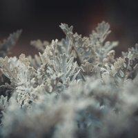 Холодает :: Оксана Летняя
