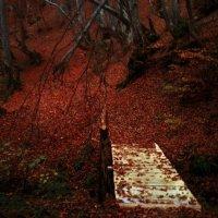 осінь :: Яна Шкирта