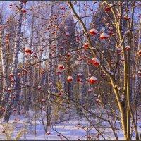 В лесу горит костер рябины красной... :: Владимир Холодный