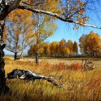 Моя любимая осенняя пора :: Юрий Налобин