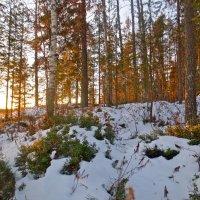 брусничные кустики зимой :: Елена