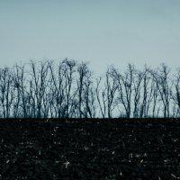 Одинокий ряд деревьев :: Сергей Руденко