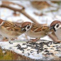 тройка храбрых :: linnud