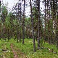 Летом в лесу. :: Галина Полина