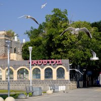 Архитектура и чайки :: Александр Деревяшкин