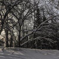 Зимние зарисовки :: Sergey Kuznetcov