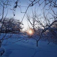 Экскурсия в Гадюкино зимой (36) :: Александр Резуненко