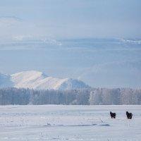 Зима в Уймонской долине :: Валентина Кобзева