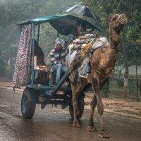 Гужевой транспорт, такси :: Виктор Куприянов