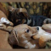Ты завел собаку, друг любезный.......... :: Людмила Богданова (Скачко)