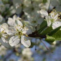 Верьте, придёт весна! :: Николай Масляев