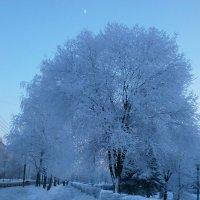 Зима....была.... :: Алёна Савина