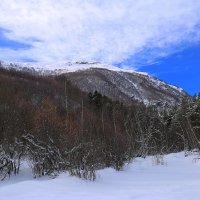 Солнечным днем в горах :: Zifa Dimitrieva