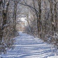 Яркие моменты зимы :: Игорь Сикорский