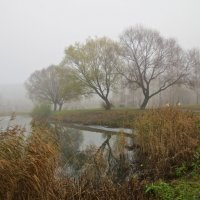 осенний туман :: Елена