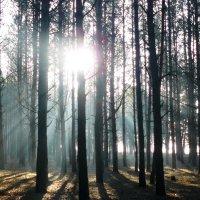 утро в лесу :: Леонид Натапов
