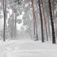 Метель ворвавшись снегопадом... :: Лесо-Вед (Баранов)