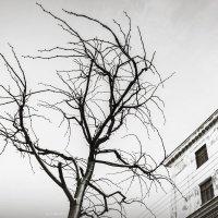 Дерево :: Александра Бенцман