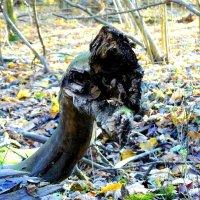 атакующая змея с разинутой пастью :: Александр Прокудин