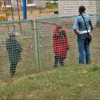 Общение через забор :: Нина Корешкова