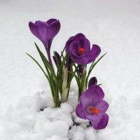 Весна с зимой встретились :: Ирина Приходько