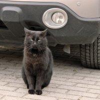 Брутальный котик.. :: Elena N