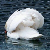 Их крылья чище снегопада...! :: Наталья