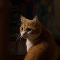 Наш кот :: Александр Пушкарёв