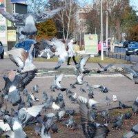 Голуби :: Ростислав