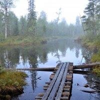 Лесное озеро :: Надежда Водорезова
