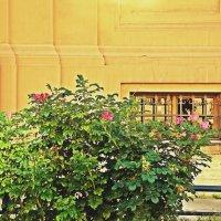 Стена здания Академии Художеств :: Весна