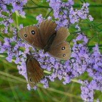 Бабочки. :: nadyasilyuk Вознюк
