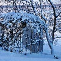 Экскурсия в Гадюкино зимой (39) :: Александр Резуненко