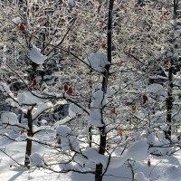 Инея лесные кружева... :: Лесо-Вед (Баранов)