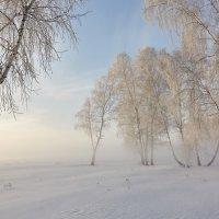 Утро туманное :: Николай Мальцев