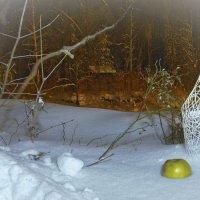 Взгляд на снег... :: Alexander Smirnoff