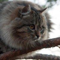 Идет охота :: Оксана Лада