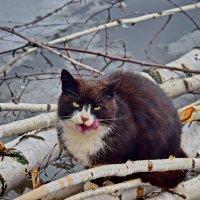 Кот  рыбак.  Живет  на  речке. :: Валера39 Василевский.