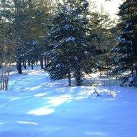 Зима в лесу! :: Андрей