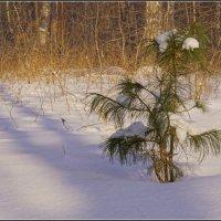 Февраль :: Владимир Холодный