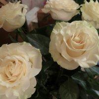 Розы :: Валентина Жукова