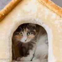 Кошка :: Андрей Кузнецов