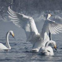 Танцы на воде :: Ольга Фролова