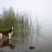 на озере туман :: liudmila drake