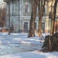 Старый пень :: Ольга Князева