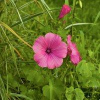 Цветок в саду :: Наталья Копылова