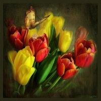 Тюльпаны :: mila