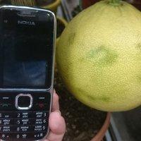 Лимон (Цитрофортунелла Д20 Н70) :: Galina194701