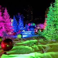 Новогодний сад, Монтекарло :: Witalij Loewin